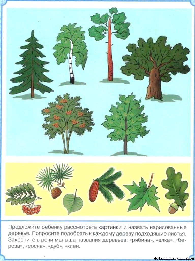 детский знакомство с природой
