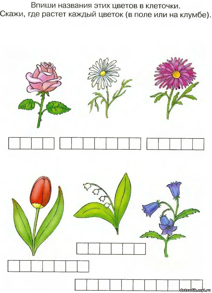 знакомство детей с природой в детском саду