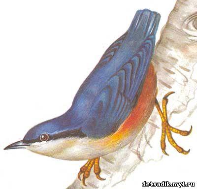 знакомство с птицей конспект занятия