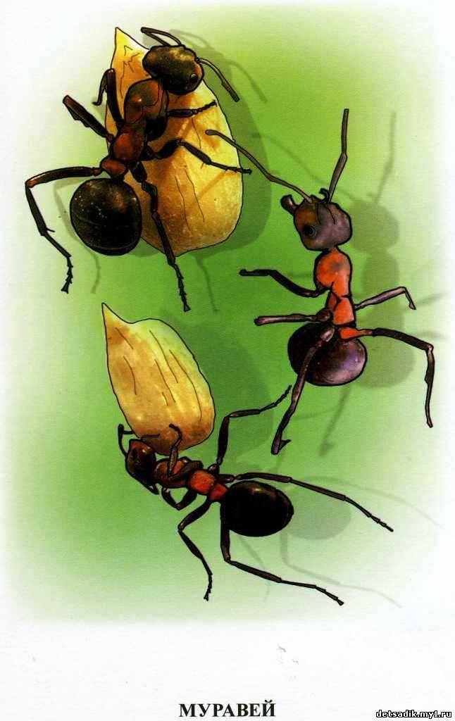 знакомим дошкольников с насекомыми